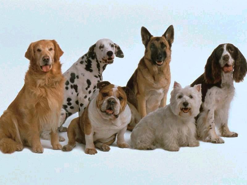 Razas de Perros y Gatos - Blog sobre razas de perros y gatos