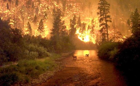 fires_mccolgan_big